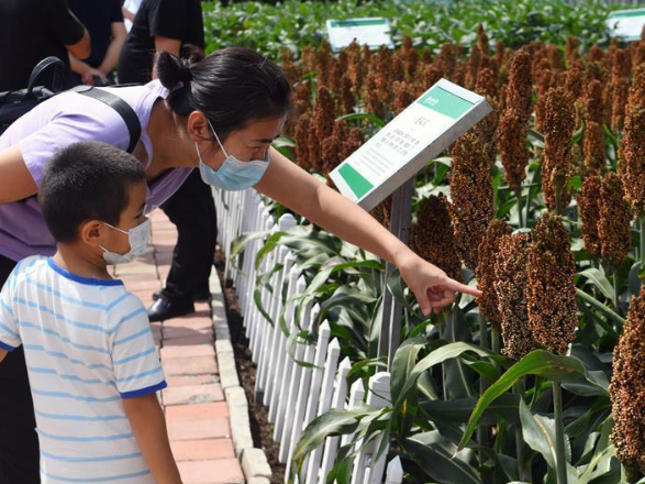 Int'l agriculture and food fair expo held in Changchun