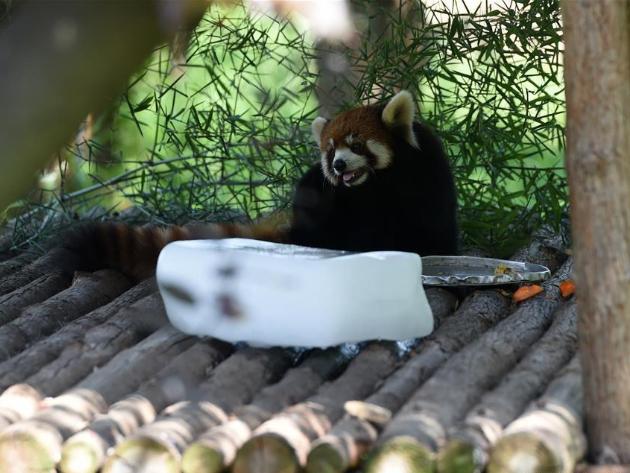 Hefei Wildlife Park takes measures to help animals fend off summer heat