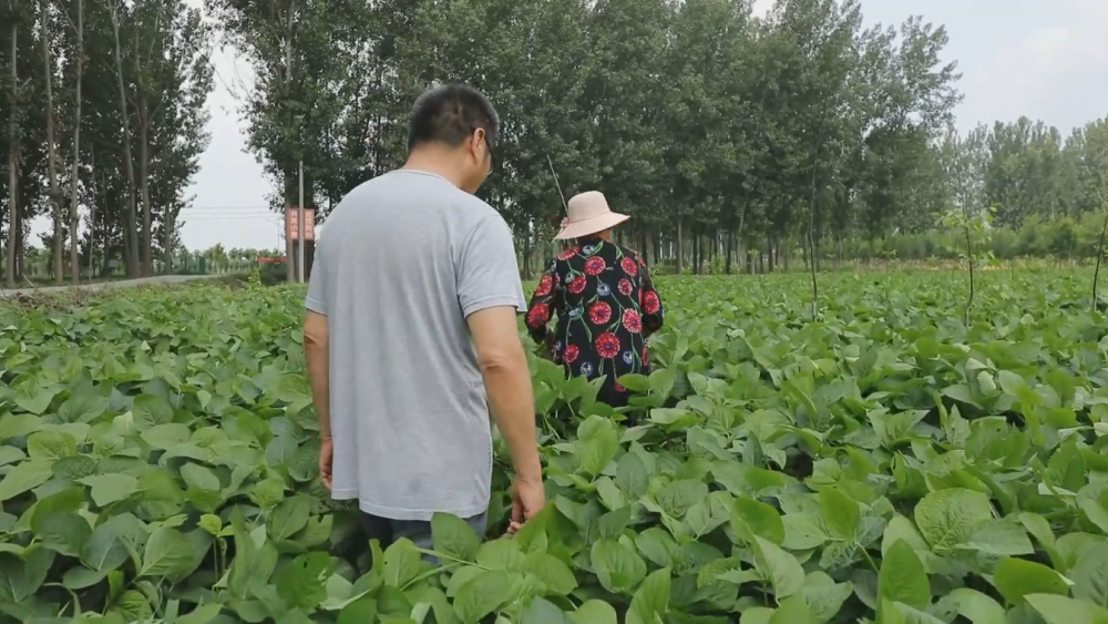 Immigrants' new lives after leaving the floodplain of the Yellow River