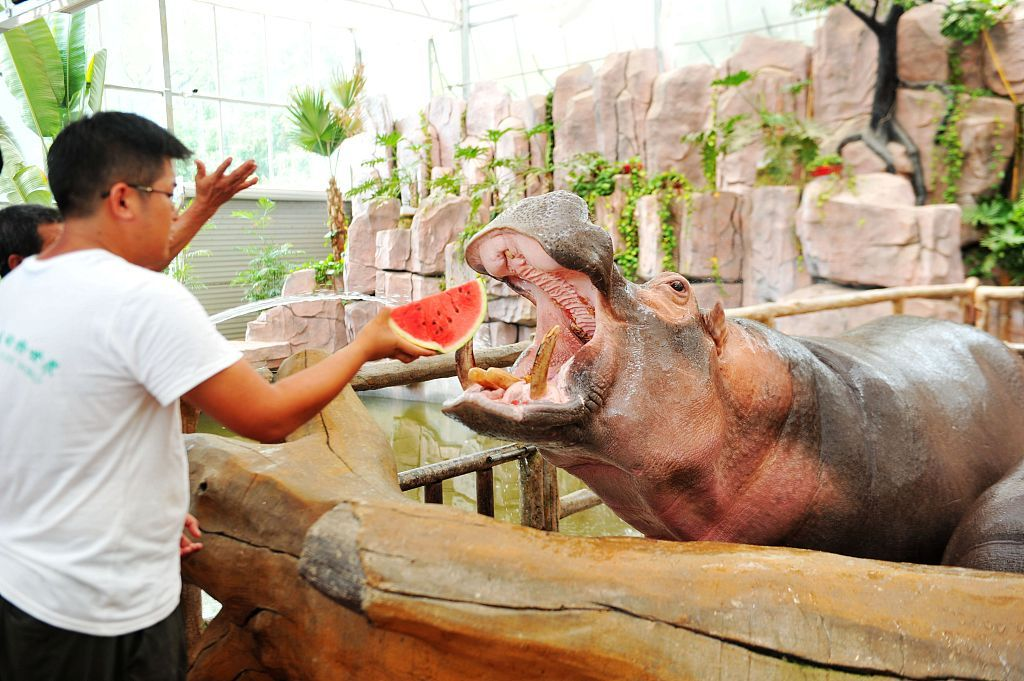 Animals kept cool by Qingdao zookeepers