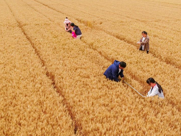 Ample supplies will ensure China's food security: experts