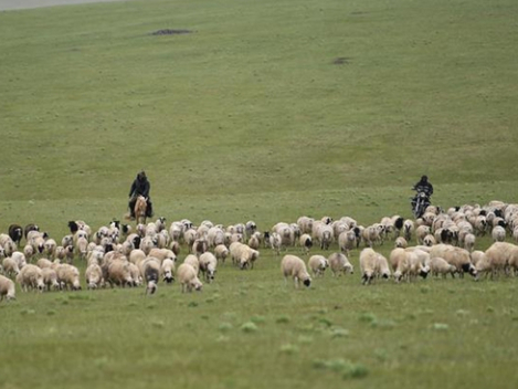 Mongolia soon delivering 30,000 sheep to Wuhan: Chinese ambassador