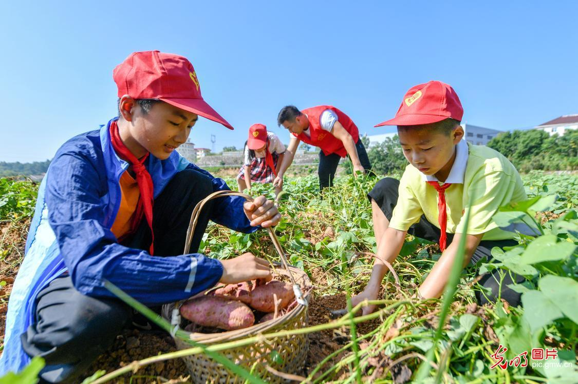 Students experience farming and practice thrift in E China's Zhejiang