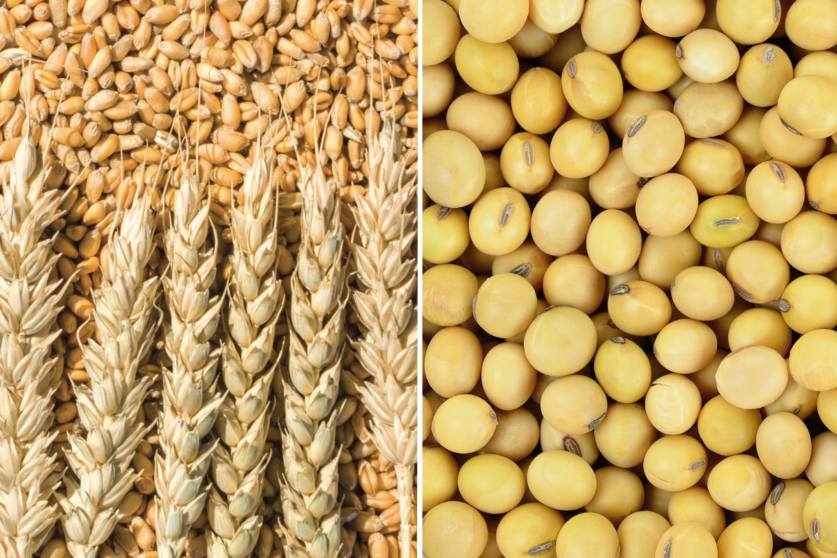 China's imports of wheat, soybeans rise in Jan.-July