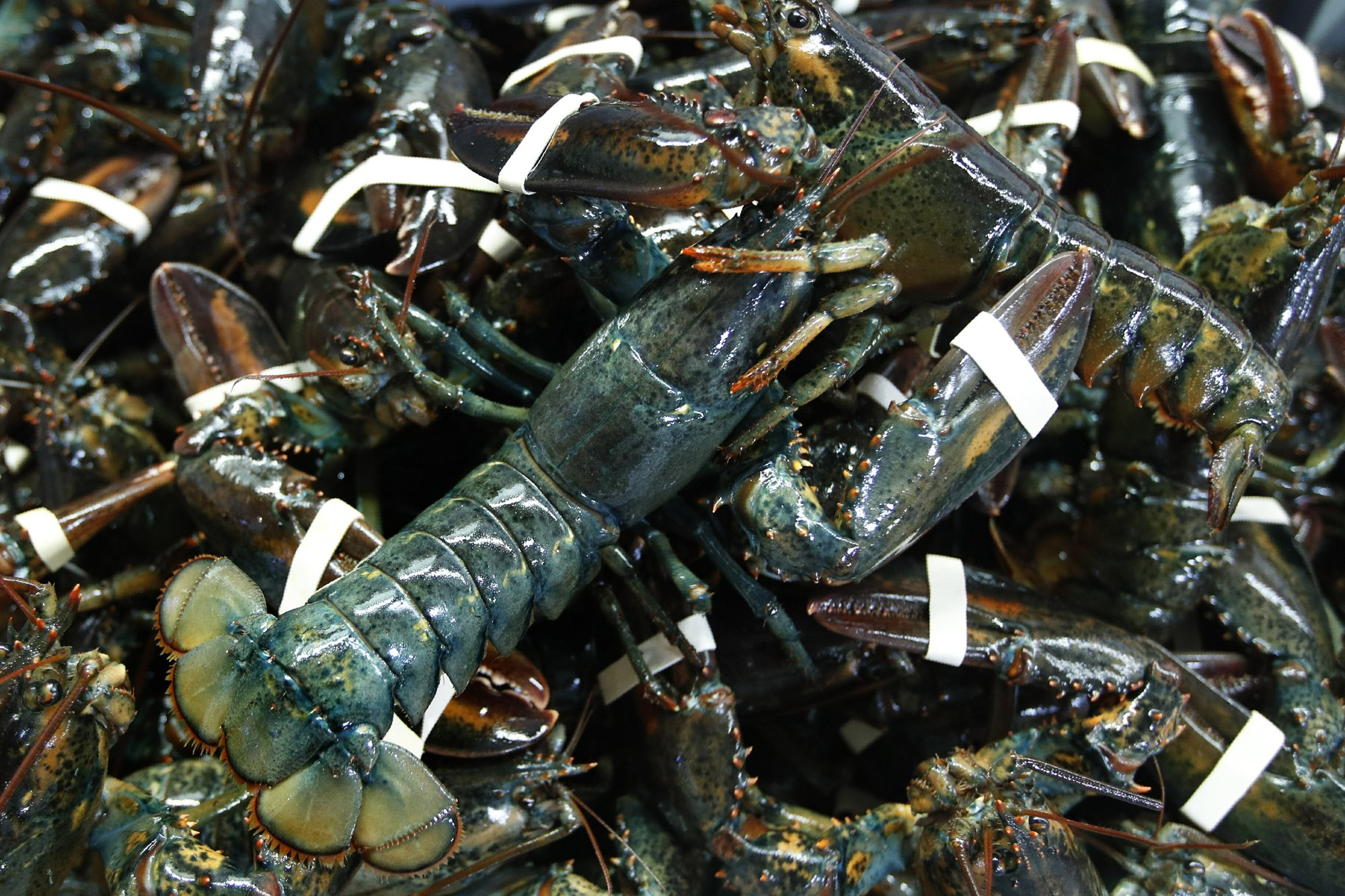 EU agrees to cut taxes on US lobsters in modest trade pact