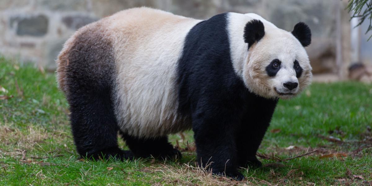 Baby panda born at Washington's National Zoo