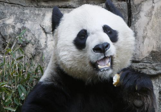 US national zoo calls giant panda Mei Xiang 'excellent and attentive mother'