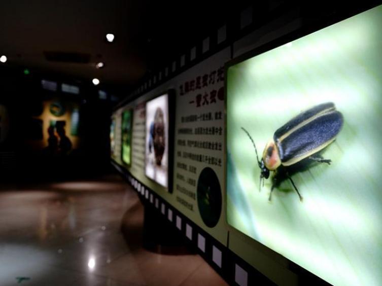 Shanghai Science Festival held in entomological museum