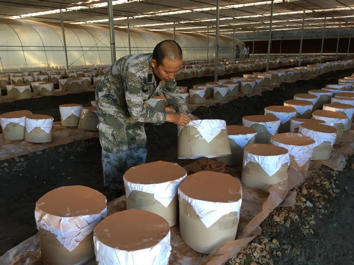 Land reforms help farm profits mushroom