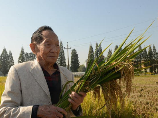 Scientist: Food security remains key issue
