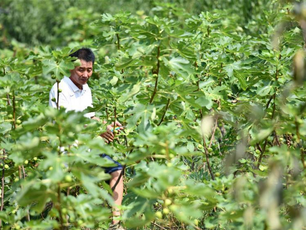 Pic story: farmer helps poverty-stricken people increase income