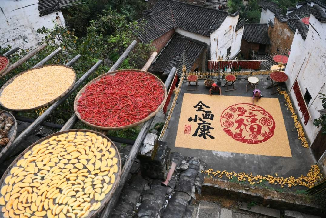 Beautiful harvest tradition in Wuyuan, East China's Jiangxi