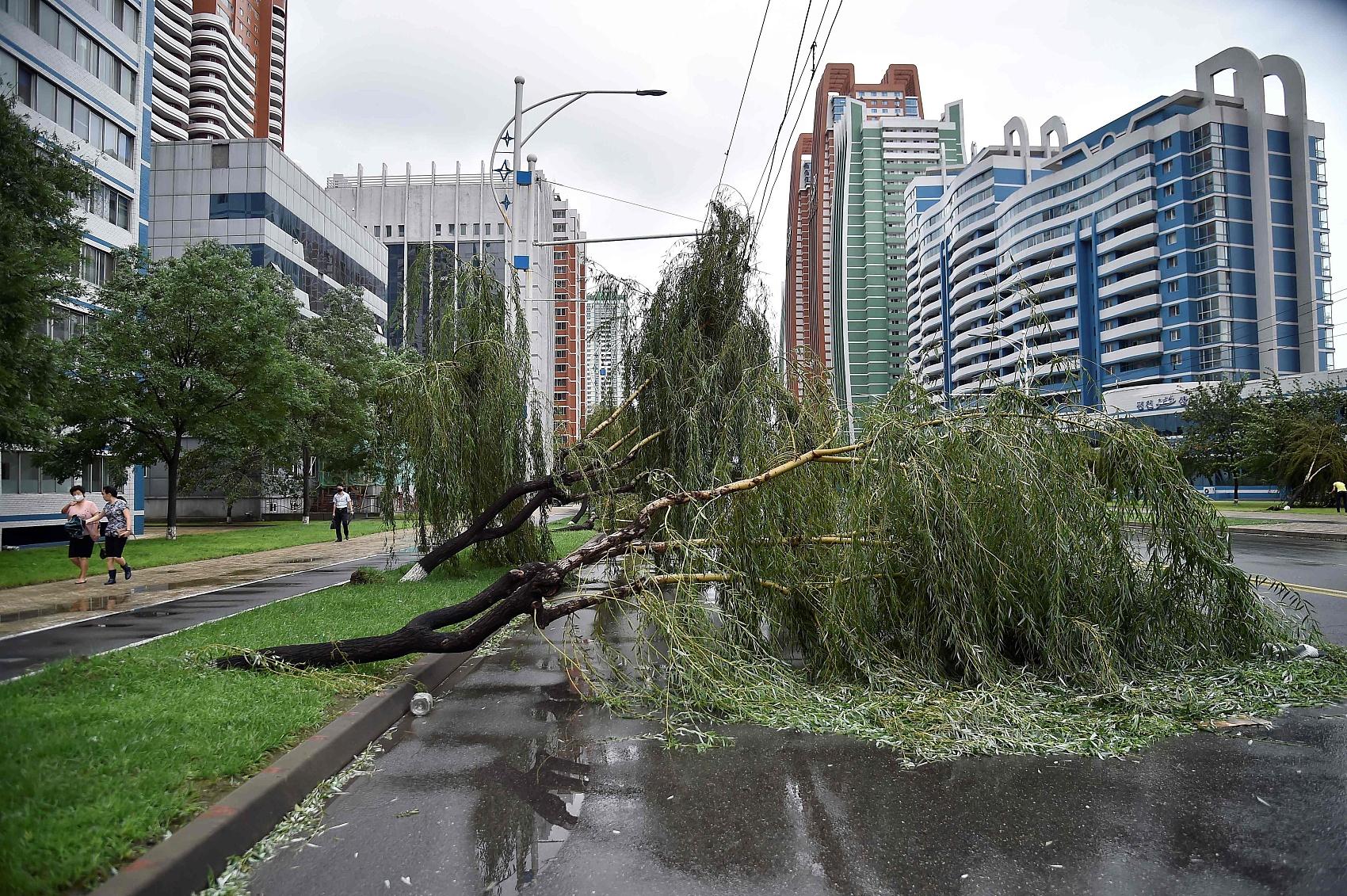 DPRK takes measures to minimize typhoon damage