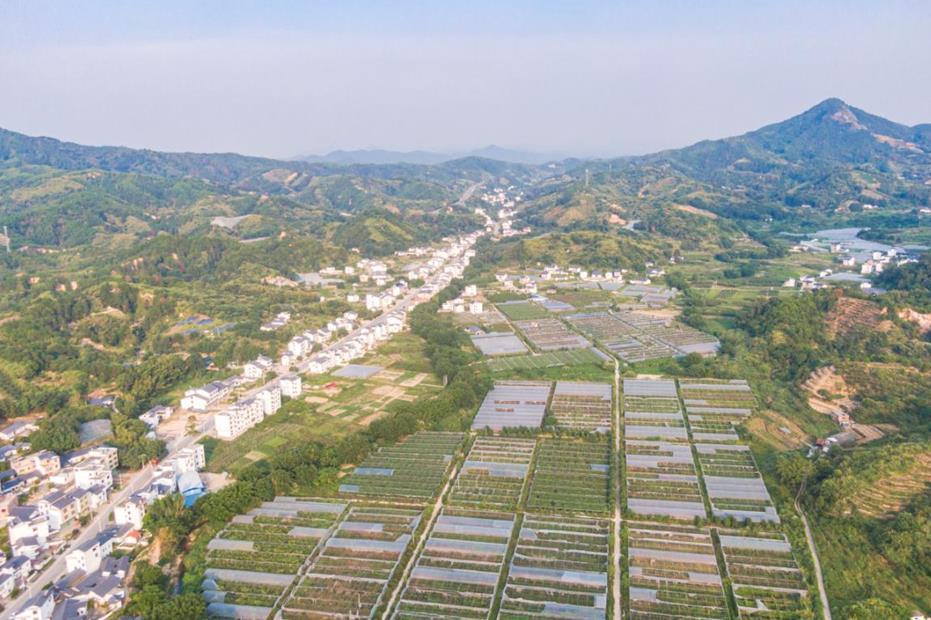 Hakka village plants path to prosperity