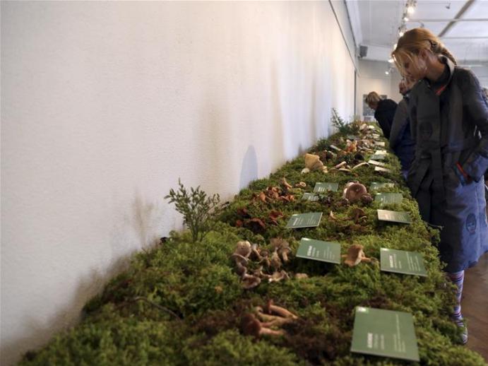 People visit 'Mushroom 2020' exhibition at Latvian Museum of Natural History