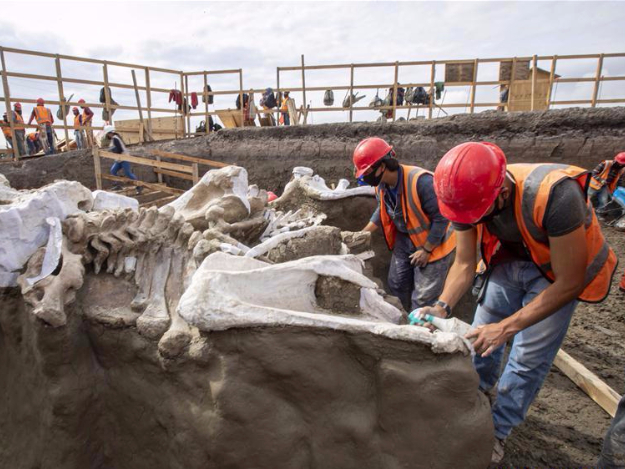 Bones of mammoth skeletons found at construction site of airport in Mexico