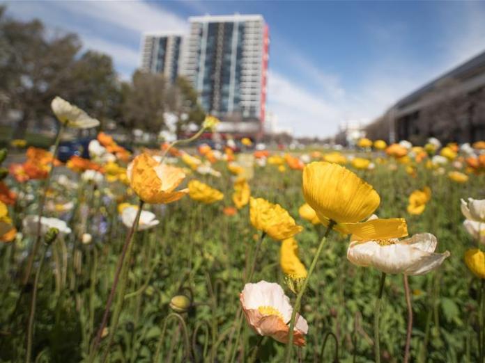 Annual flower festival held in Canberra, Australia