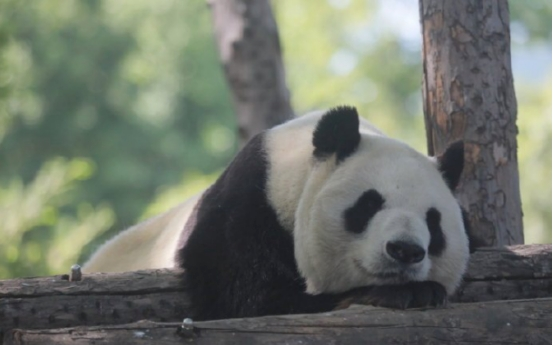 Giant Panda Dadi dies at age 28 in Beijing Zoo