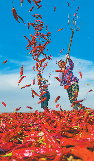 Pay tribute to China's farmers