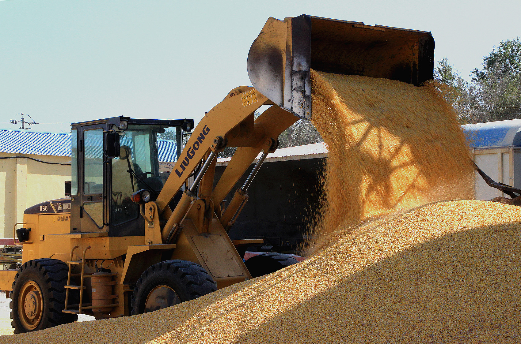 China expects another bumper year in grain output