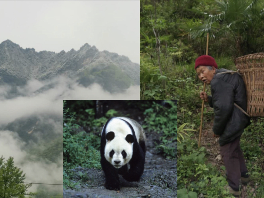 Why does a panda habitat researcher have to keep bees?