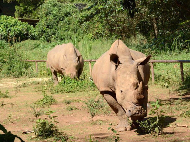 UWEC offers free entrance during celebrations to mark World Rhino Day