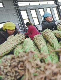 Emerging industry boosts rural growth