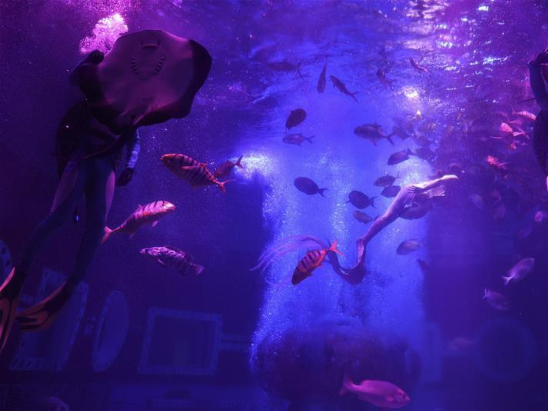 Underwater performance staged at Harbin Polarland in Heilongjiang