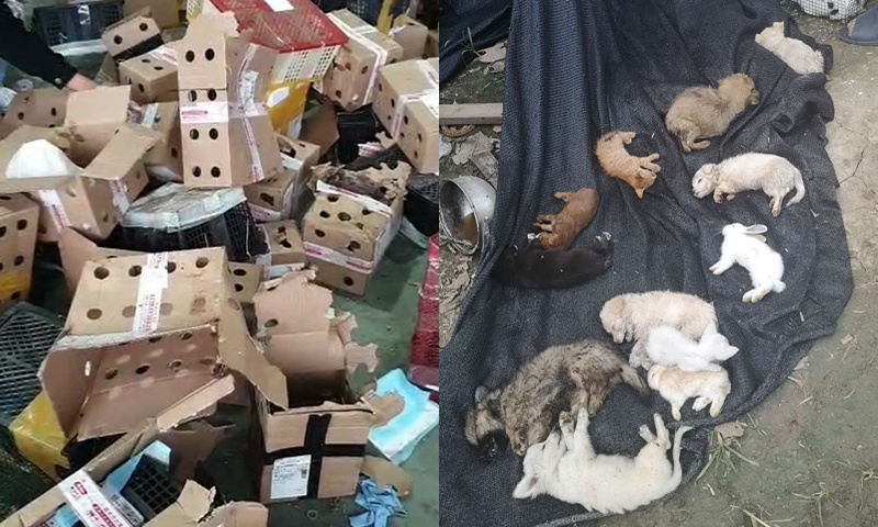 5,000 animals found dead in express boxes in Central China's Henan: volunteers