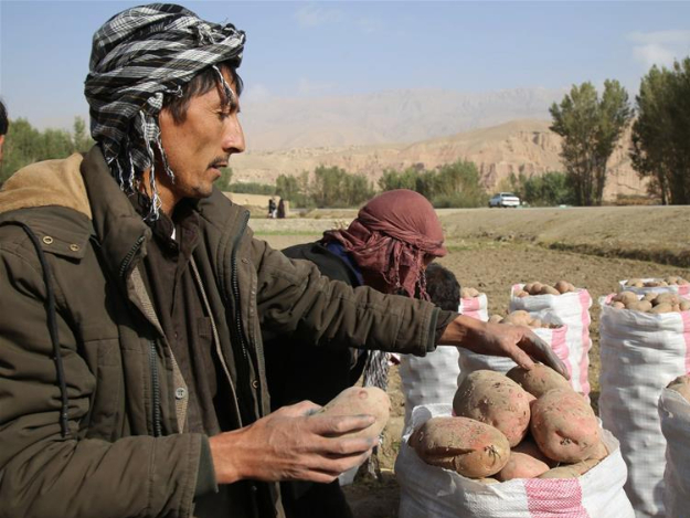 16 zero energy cold storages built in C. Afghanistan: gov't