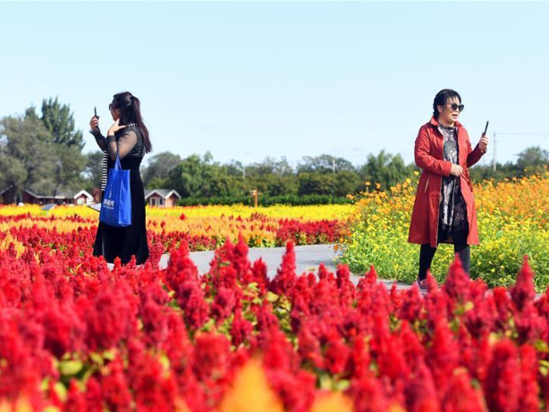 Tourists enjoy leisure time amid flowers in Beijing