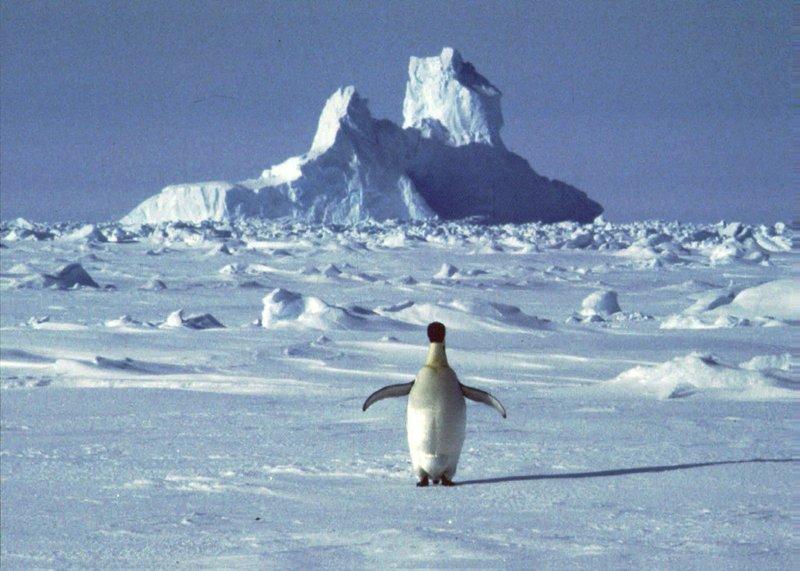 Antarctic Peninsula at warmest in decades: study