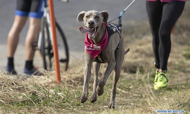 Annual 'Fast Dog' race held in Moscow, Russia