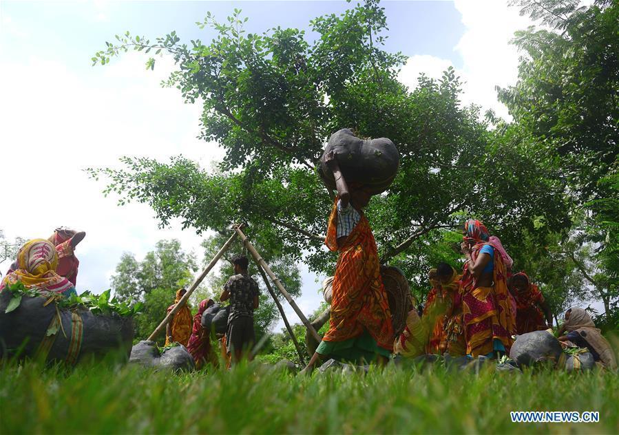 In pics: tea garden workers in India