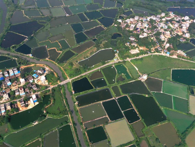 Aerial view of shrimp ponds in south China's Guangxi