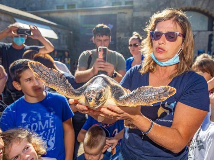 Croatia's Aquarium Pula releases four rescued sea turtles