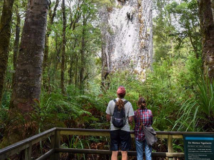 People view kauri tree at Waipoua forest in Northland, New Zealand