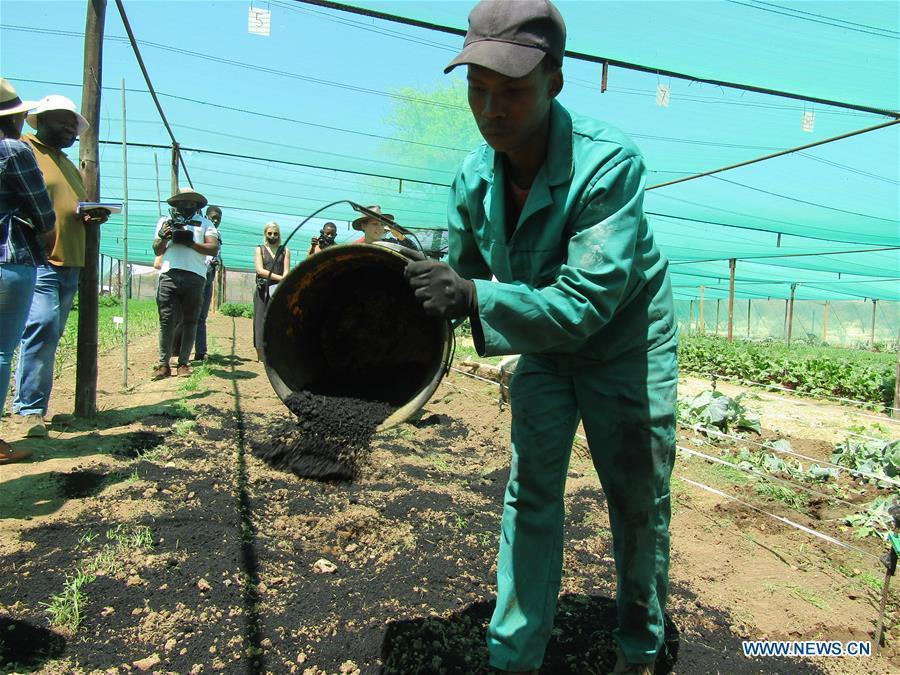 Namibian farmers turn to locally produced biochar as fertilizer