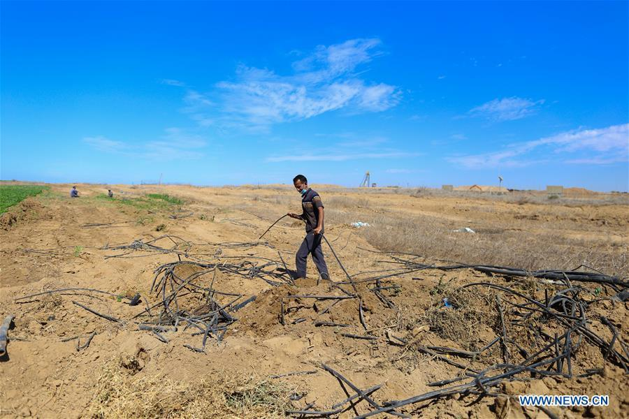 Palestinians inspect farm after Israeli army bulldozers rolled parts of it