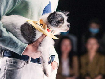 Therapy dogs do the catwalk