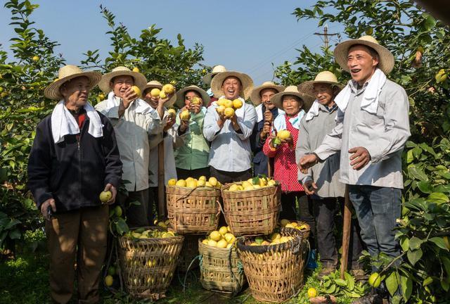 Political advisors discuss measures to boost farm-produce sale
