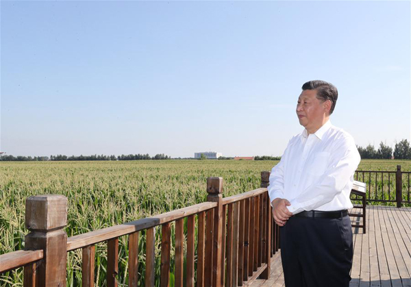 Xi and food security: Grains in hand, no worry in heart
