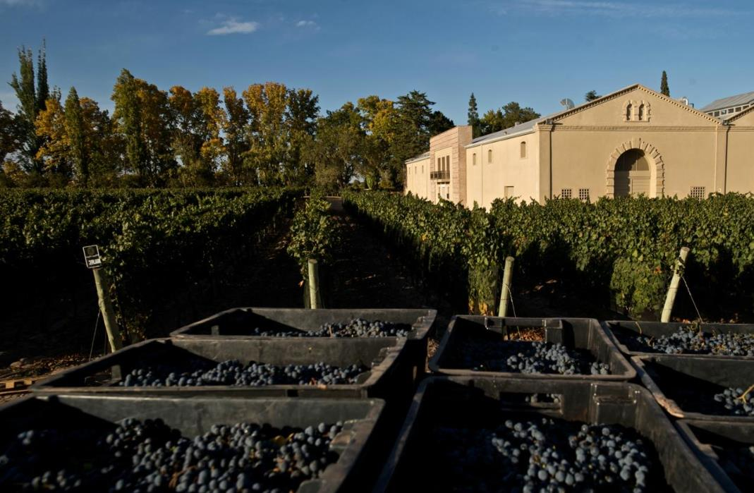 Argentinean wine producer sees CIIE an opportunity to expand Chinese market