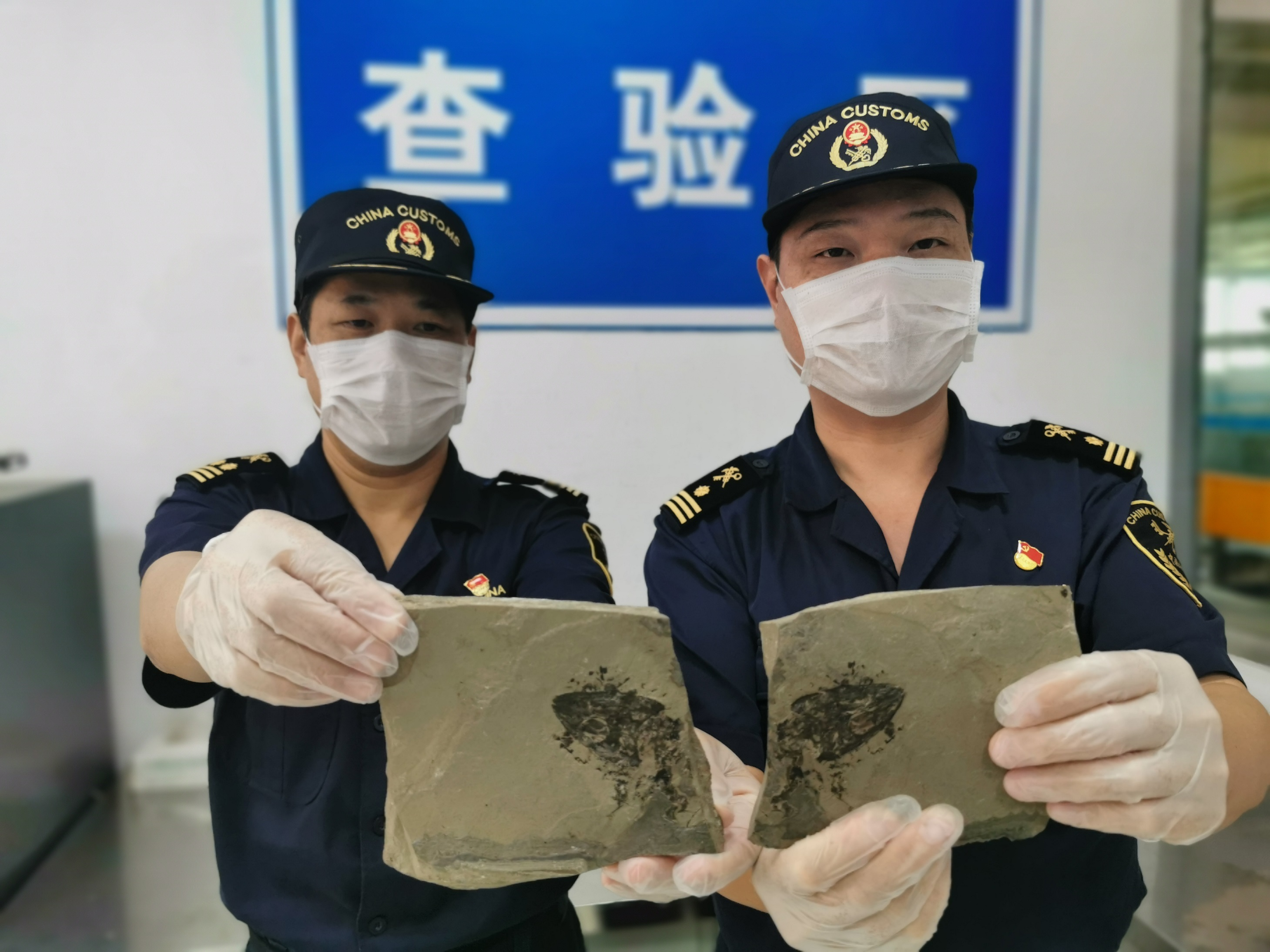 Fujian customs found illegal export fossils hidden in air express packages