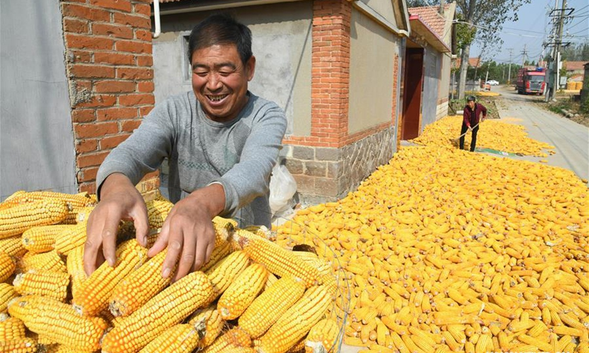 Speculation pushes Chinese corn price higher; grain supply is secure: official