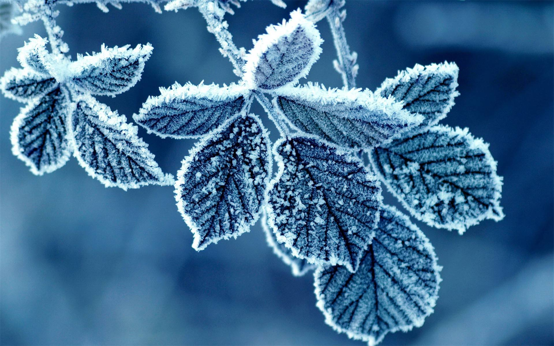 Chinese solar terms: Frost Descent