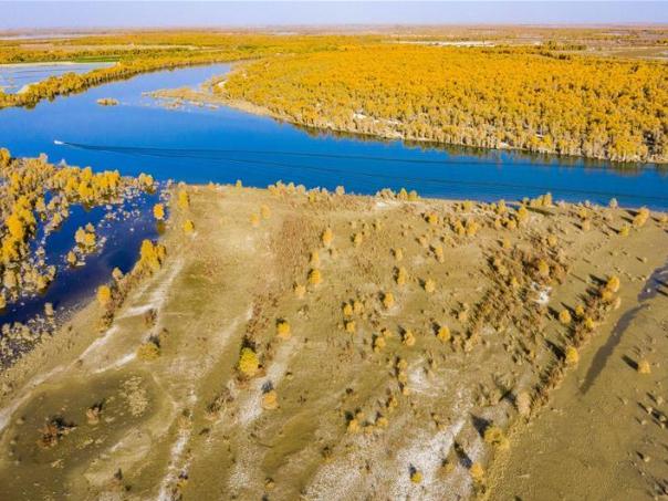 Autumn scenery of desert poplar forest along Tarim River in Xinjiang
