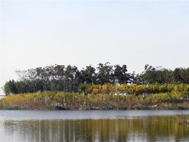 View of wetland park in Tianjin