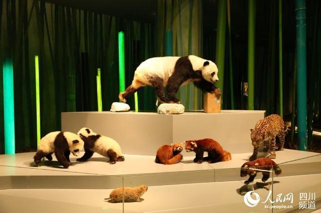 New giant panda museum enters trial operation