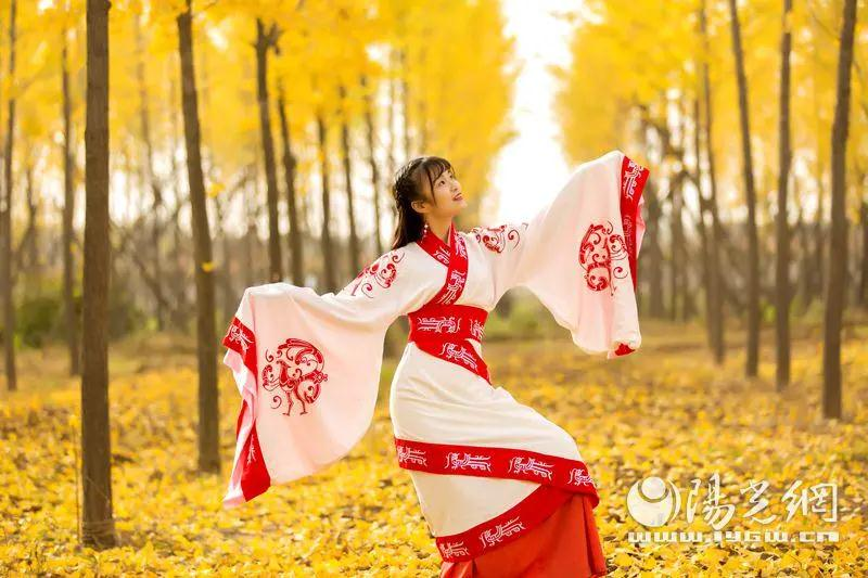 This is Shaanxi: Hanyangling Ginkgo Forest